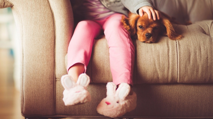 Bienestar del perro_dogminancia.com