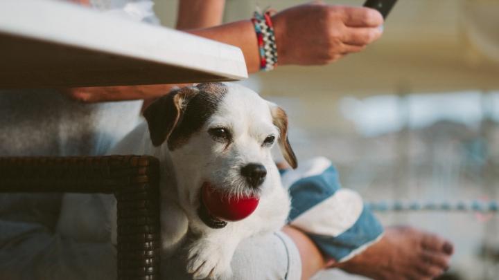 Relación con tu perro_Dogminancia