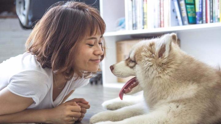 Relación con tu perro2-Dogminancia