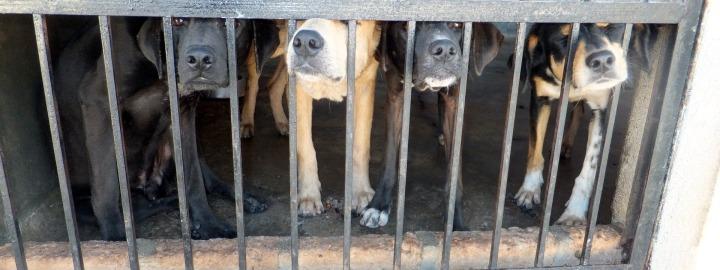 dogminancia perros abandonados 2