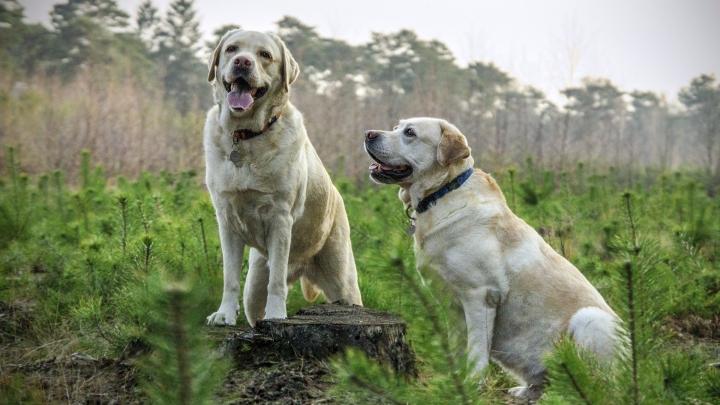 Dogminancia_perro dominante 3