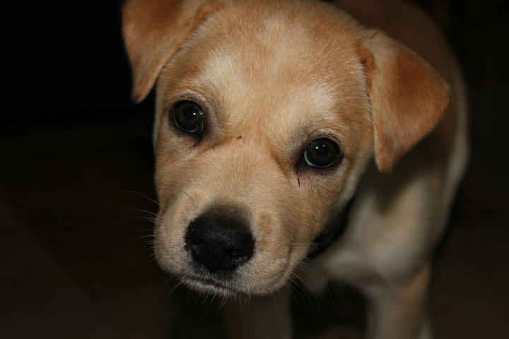 Dogminancia_cachorro miedo