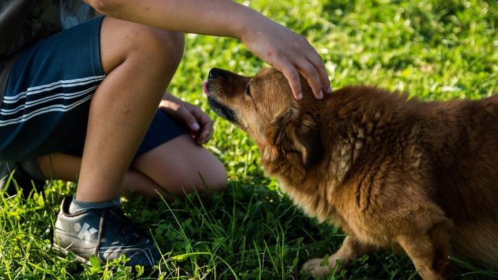 Dogminancia_perro miedo
