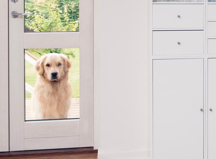 Dogminancia-perro jardín