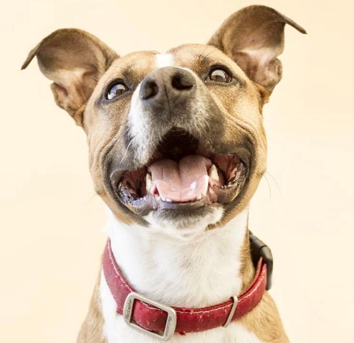 Dogminancia-Consejos educar perro
