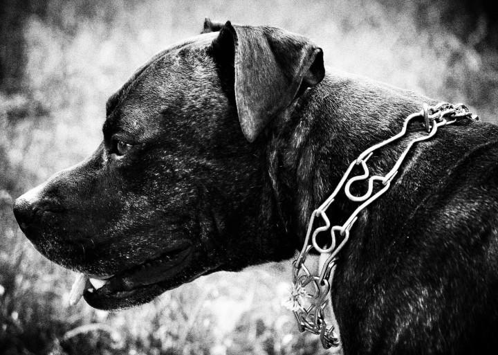 collar de ahorque_dogminancia