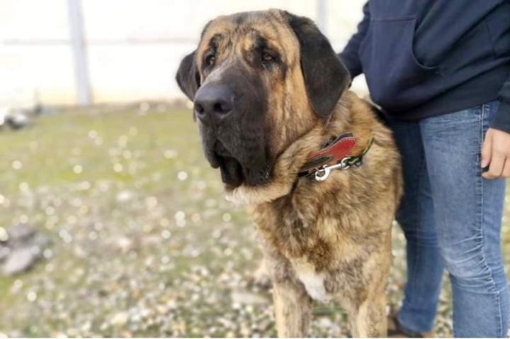 protege a tu perro_dogminancia
