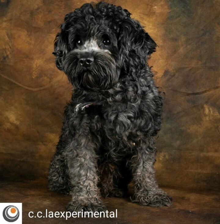 Temor perros-dogminancia