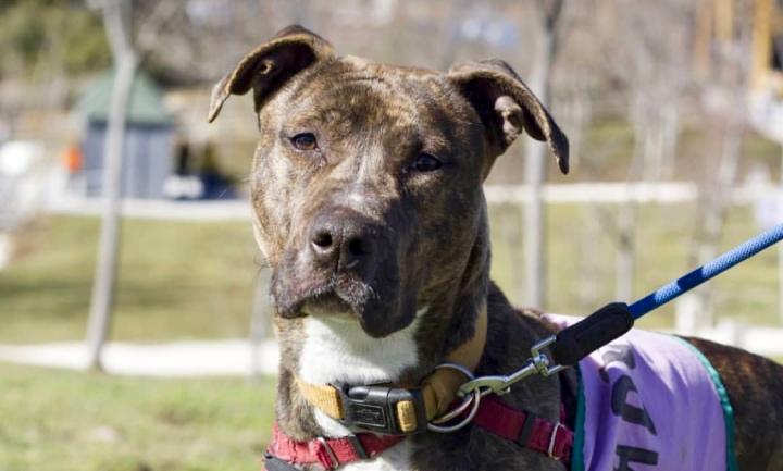 Desaprender lo aprendido perro- dogminancia