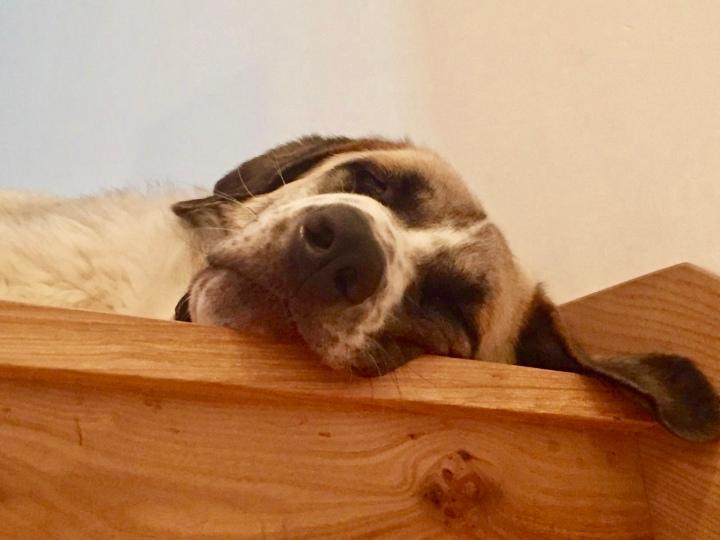 Mona- adopta- dogminancia
