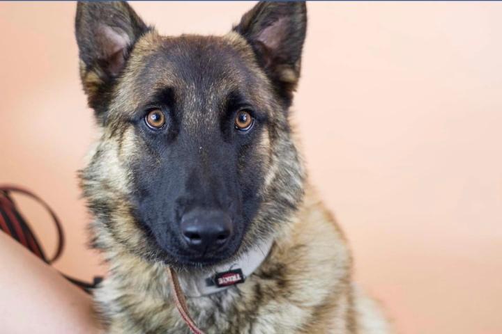 perros prohibido-dogminancia
